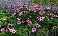 Herbs, Gardening, Flowers, Plants, Anna, Health, Lawn And Garden, Health Care, Herb