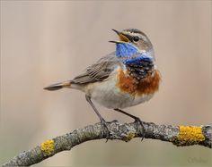 bird9 - Bird Photography by Anna Solisia  <3 <3