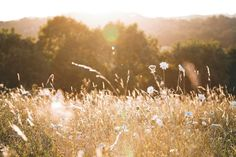 Why Golden Hour Photography Rocks! – David Molnar – Your Photography Mentor Close Up Photography, Mountain Photography, Aerial Photography, Product Photography, Yellow Daisy Flower, White Flowers, Summer Romance, Travel Images, Landscape Photographers