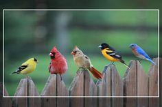 Birds of a color... (finch, cardinal, bluebird, oriole)