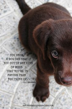 Dog Quote - You know a dog can snap you out of any kind of mood that you're in, faster than you think of.