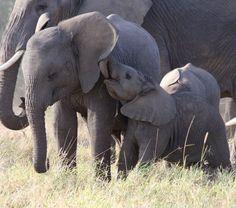 Help protect wild elephants