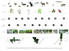[ Maisy - Group C: Fauna ]  This diagram displays how different types of animals and vegetations interacts with the landscape and various human activities. by Kate Hayes - Wilde washington, 24 July 2013