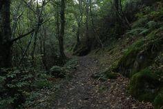 Preciosa ruta guiada de senderismo por bosques autóctonos en el occidente asturiano, para acabar en una bella cascada. Existe una desviación al final para subir a ver dos tejos centenarios junto a la ermita de Busqueimado. La ruta cruza por el Valle del desterrado.