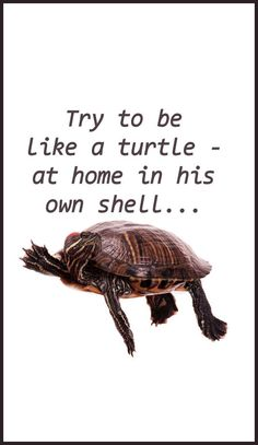 Motivational quote - turtles in their shells