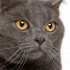 Πως ξεκίνησε η Επιδημία της Πανούκλας - Ο Πάπας Διέταξε να Εξοντωθούν οι Γάτες ως Πλάσματα του Σατανά (ΒΙΝΤΕΟ) ΠΙΣΩ ΑΠΟ ΤΟ ΠΑΡΑΠΕΤΑΣΜΑ