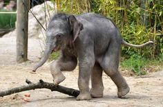 Cute Baby Elephant Photos