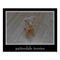 Patterdale Terrier Aged Photograph Poster - dog puppy dogs doggy pup hound love pet best friend