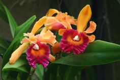 Hawaii Islands of Aloha themed Philadelphia International Flower Show on the Visit Philly site.