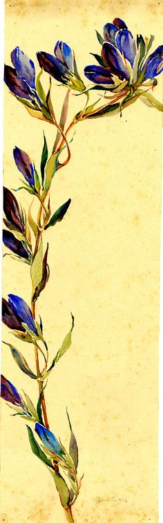 Watercolor, Gentian, by Alice Ravenel Huger Smith, a Charleston Renaissance artist. Charleston Museum