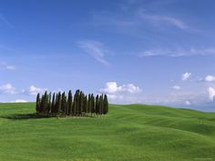 Val d'Orcia, Countryside View, Green Grass and Cypress Trees, Tuscany, Italy -- Steve Vidler