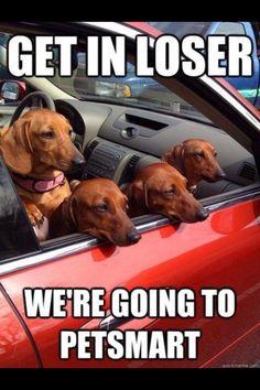 Bahaha weiner dog bullies