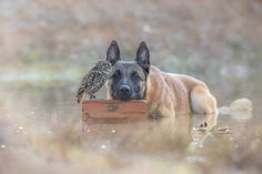 A bit of friendship between a dog and an owl....by Tanja Brandt on 500px