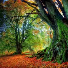 An enchanting forest