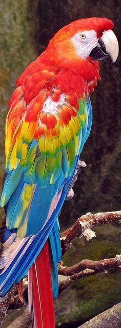 Colorful Birds, Draw, Parrots, Canvas, Bunny, Animals, Oil, Owl Wallpaper, Tela