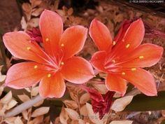 Flores do Meu Jardim.. (Outonal.. )