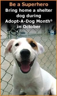 October is Adopt A Shelter Dog Month, Please visit your nearest shelter and consider adopting one of the many amazing, wonderful, beautiful dogs that are waiting for their family and furever home!
