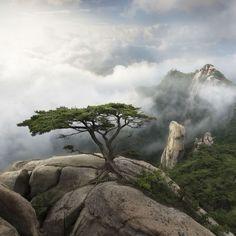 Guardian of the mountain ....by Jae Youn Ryu