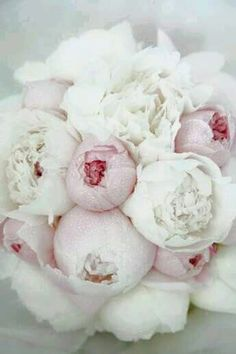 I absolutely love this bouquet of peonies! I always imagined my bouquet to be full of sweet smelling springtime flowers. Flowers such as peonies, lilacs, and pastel roses. White Peonies Bouquet, Hydrangea Bouquet, Pink Peonies, Peony, Ranunculus Flowers, Pink Hydrangea, Bouquet Flowers, Hydrangeas, Flower Shops