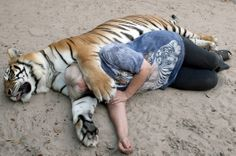 Janice Haley seen lying with Janda, the tiger at their home in Orlando, Florida. Janice's beloved babies are two huge Bengal tigers. W...
