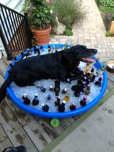 That's one way to beat the heat. They shouldn't have borrowed his pool!  LOL!    OMG!  This is awesome!!!!!!!!!!