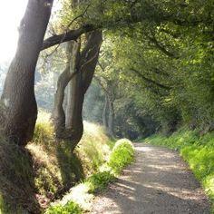 Het Lossers Voetpad, onderdeel van de Twentse Kruistocht Oldenzaal. Holland, Dutch, Hiking, Country Roads, Plants, Travel, Beautiful, The Nederlands, Walks