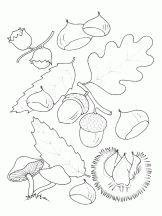 feuilles chataigne gland champignon