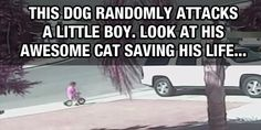 This Dog Randomly Attacked A Little Boy. Luckily, His Cat Came In To Save The Day.