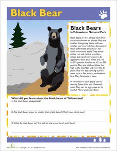 Worksheets: Black Bear