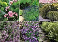 14 plantes pour bordures