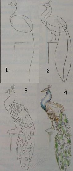 Drawing lessons for beginners - A PEACOCK