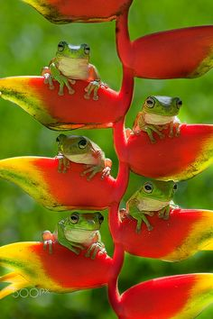 Cute little group of tree frogs. Nature Animals, Animals And Pets, Baby Animals, Funny Animals, Cute Animals, Wild Animals, Funny Frogs, Cute Frogs, Beautiful Creatures