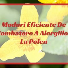Moduri Eficiente De Combaterea Alergiilor La Polen Berries, Pune, Bury, Blackberry, Strawberries