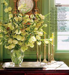 Gomphocarpus physocarpus arrangement.  Lovely