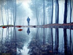 A walk in the woods by Guillermo  Carballa on 500px