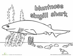 20 Sharks for Shark Week! Coloring Pages | Education.com