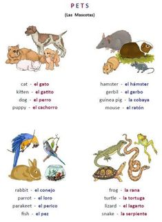 Mole To Mole Conversion Worksheet Excel Free Page Worksheet Packet  Food In Spanish From  Qualified Dividends And Capital Gain Tax Worksheet Instructions Word with A-z Worksheets For Kindergarten Word Free Printable Poster Of Spanish Pets Mascotas Dog Cat Perro Gato Fun  Introduction To Vocabulary Food Chain And Food Web Worksheet Pdf