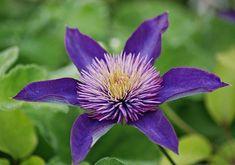 summer purple flower