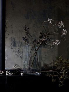 Photographer Debi Treloar OCRE_1696-006