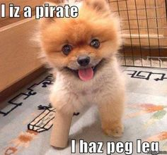Top 40 Funny animal picture quotes #funniest