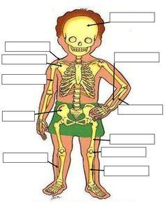 Les comparto esta ficha para poder trabajar el sistema óseo en tercer grado de primaria, esta ficha es muy buena
