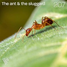 The ant & the sluggard You can listen to this talk at podcastrevival.com/207 or find us in your podcast app on your phone. #proverbs #Jesus #Christ #God #holyspirit #baptism #bible #PodcastRevival #RevivalFellowship