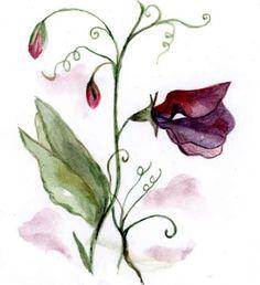 Sweet Pea Flower.