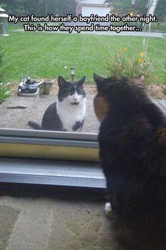 True Cat Romance