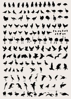 Bird and Fowl Silhouettes - Animals Characters