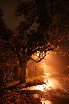 Halloween night, Victoria, British Columbia, Canada