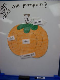 First Grader...at Last!: Pumpkins and...Peduncles?