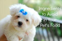 Avoid these dangerous ingredients in pet food to help your furry friend live a healthier life.