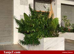 الكيف في #طنجة (جا معاه لهوا) Tanja7.com