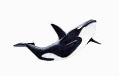 Orca - Killer Whale Painting by Michael Vigliotti - Orca - Killer Whale Fine Art Prints and Posters for Sale